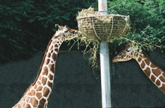 Giraffe Puzzle Photo